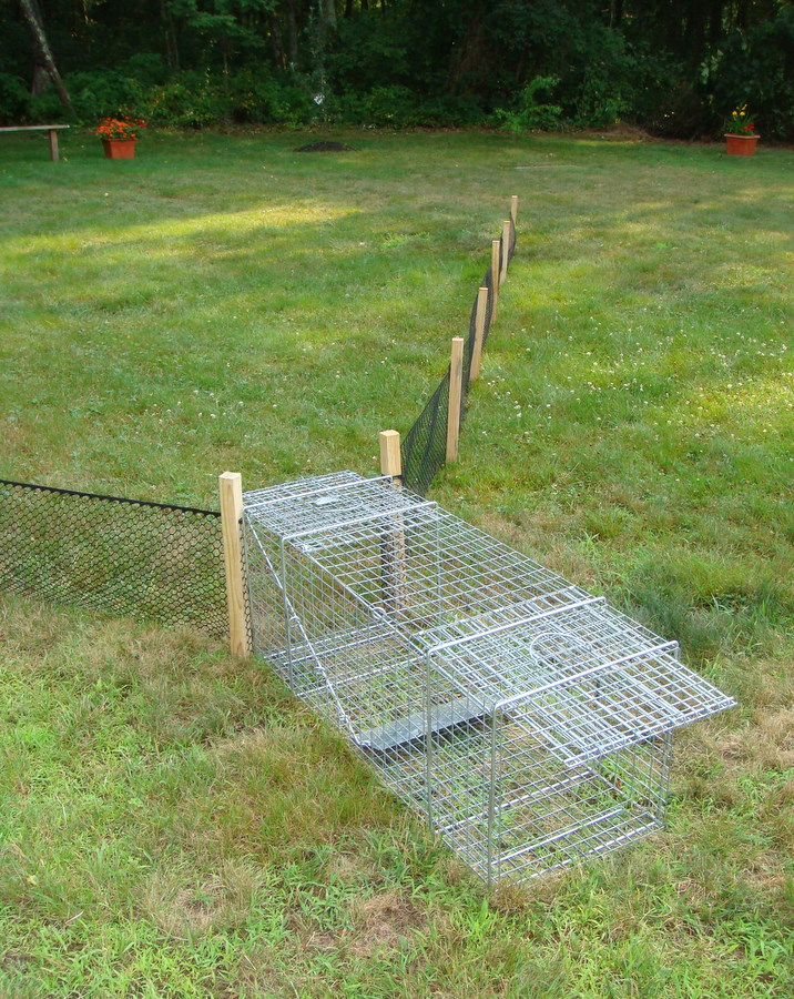 How To Trap Woodchucks A Guide To Successful Woodchuck