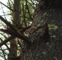 flying squirrel on a tree