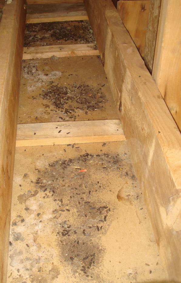Bat Removal Project In Newton Massachusetts A Bat Guys