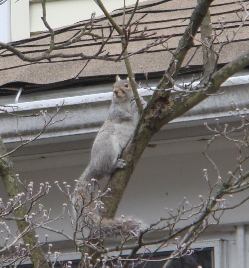 New Hampshire Bat Removal And Squirrel Removal Services