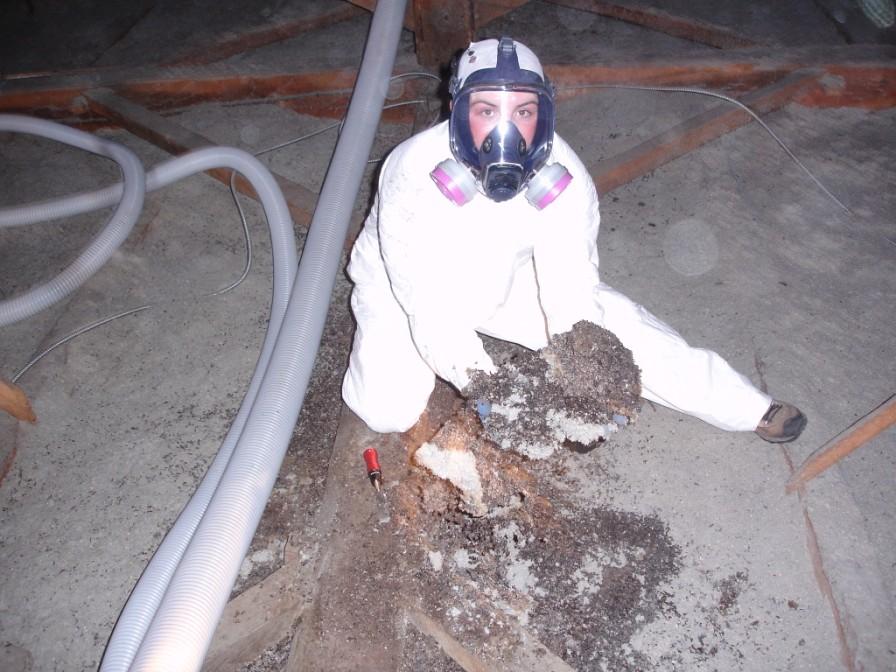 Massachusetts Attic Cleanout Bat Guano Removal