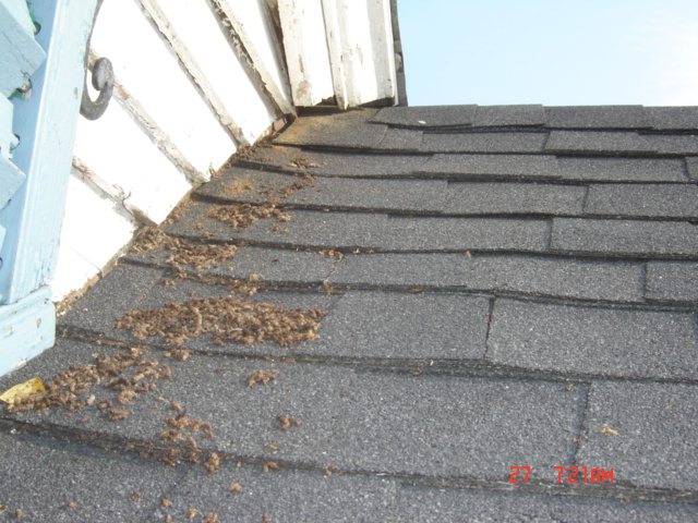 how to get rid of possums in roof of house