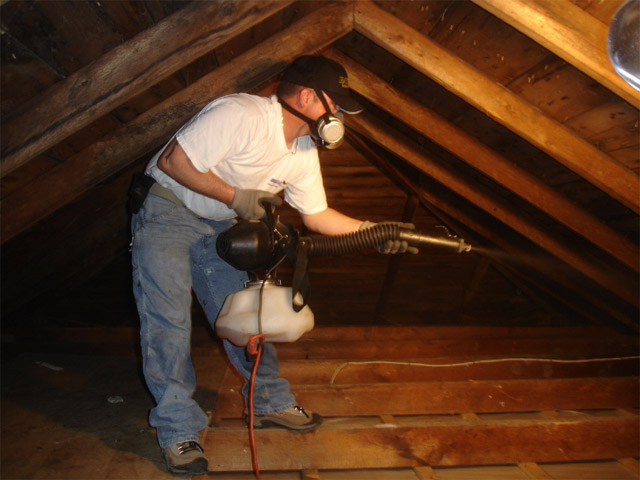 Bat Guano Removal Removing Bat Guano From Attics In