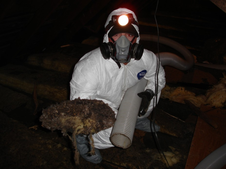 Insulation Removal Removing Insulation From Attic