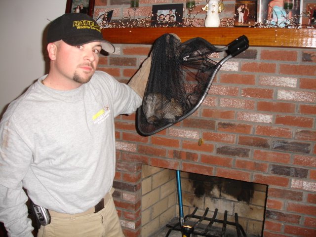 Squirrel Removal In Massachusetts Squirrel Exterminators
