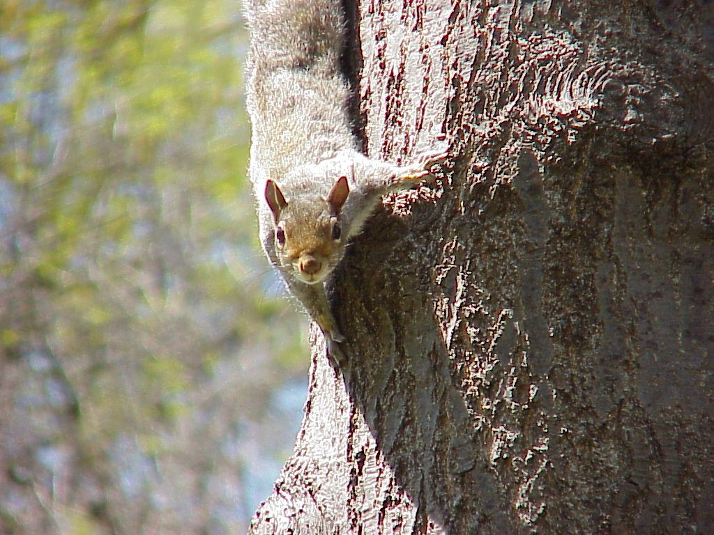 how to get rid of squirrels in your walls
