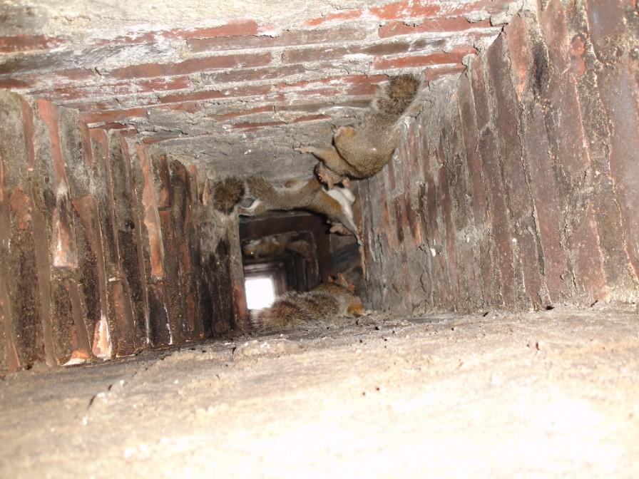 Getting Rid Of Bats Batguys Wildlife Update July 11th 2006