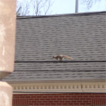 Squirrel in Providence