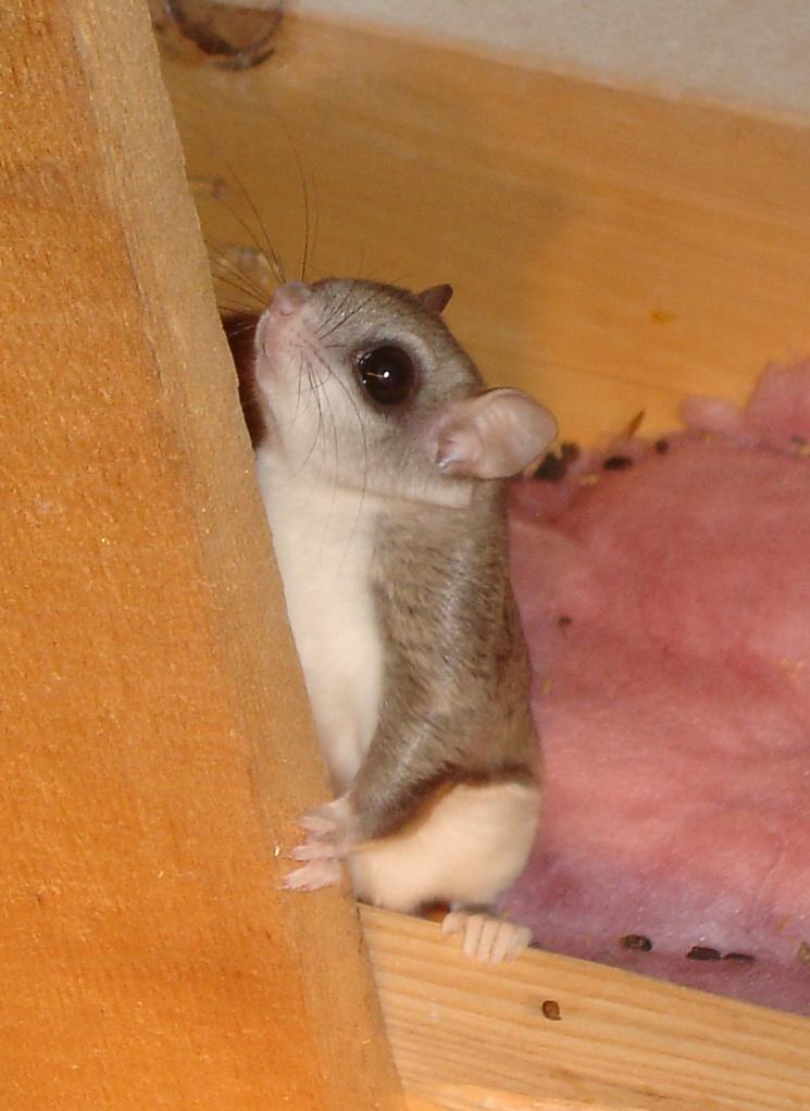 Squirrel Removal In Massachusetts Squirrel Exterminators