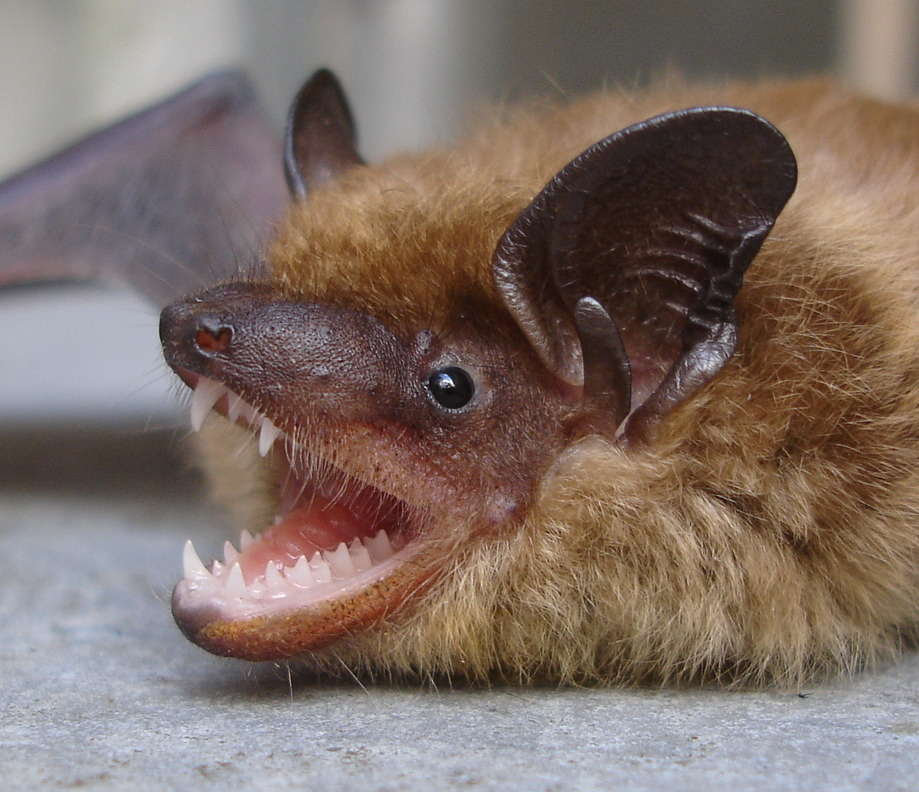 Bat Guys The Suburban Bat House