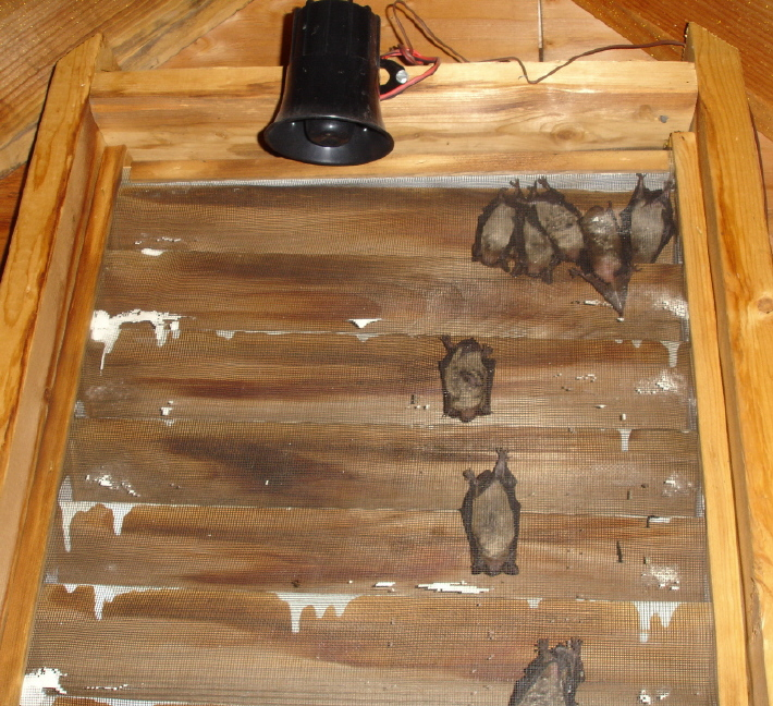 Bats Love Gable Vents